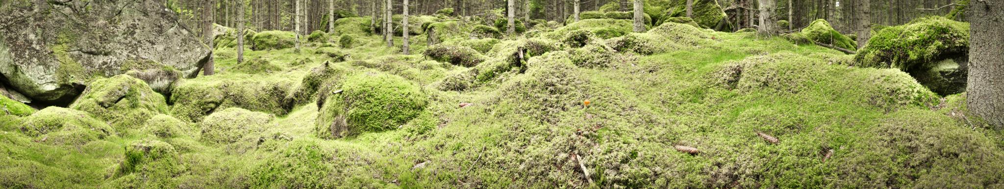 Olofstrom_fairies_wood_2K-2
