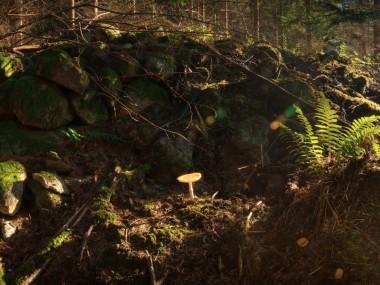Olofstrom_mushroom_2K